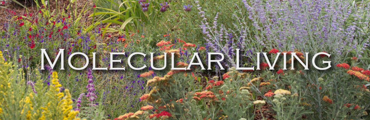 Molecular Living
